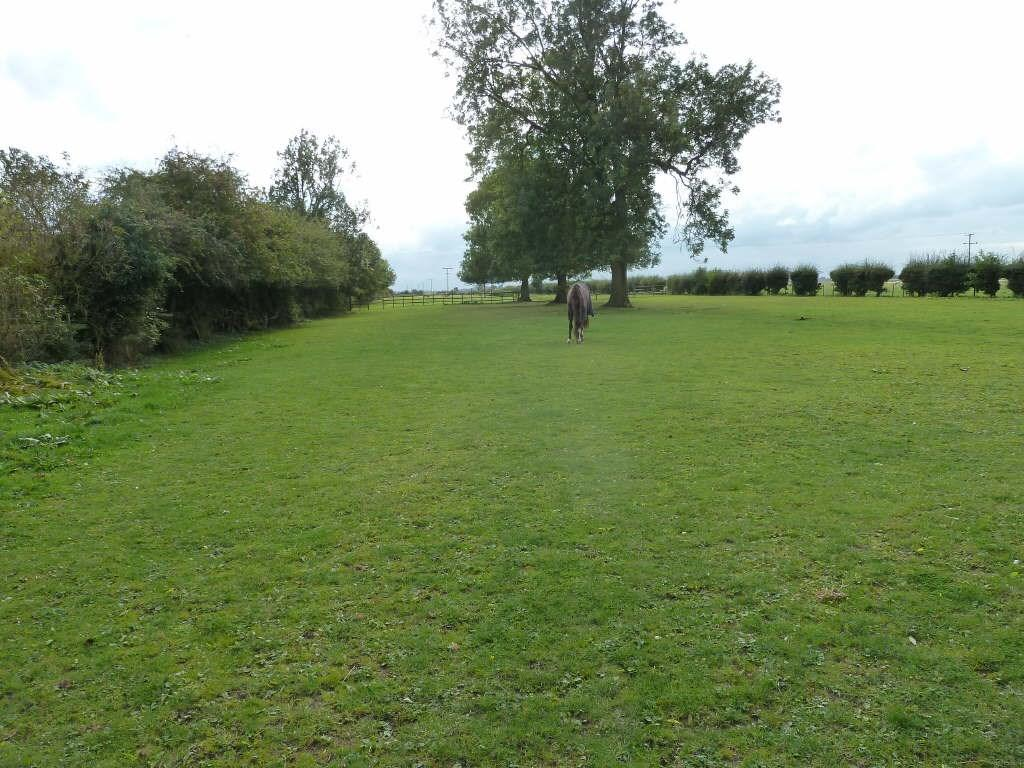 Grass Paddock