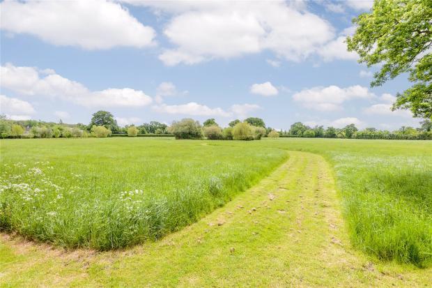 Communal Meadow