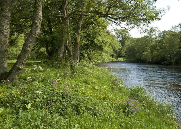 Marcus River