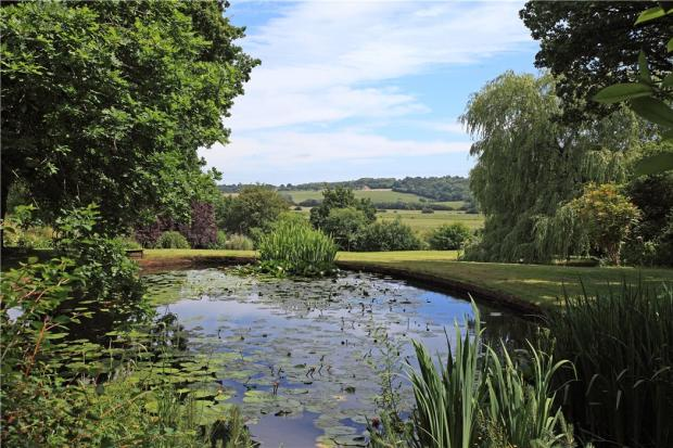 Pond & View