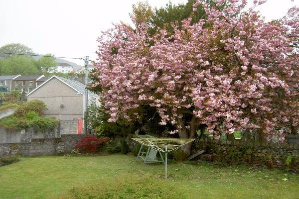Garden Vw1