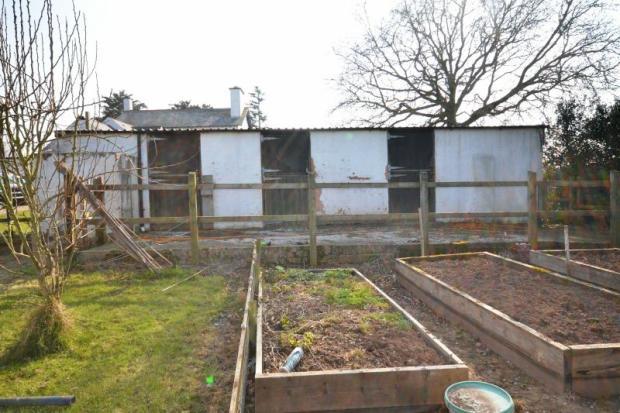 Veg plot and outbuilding