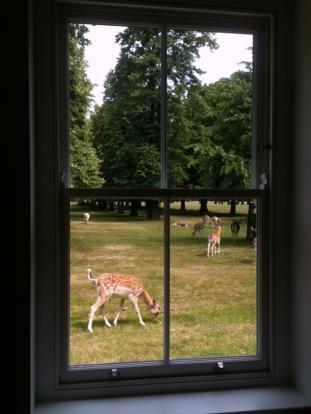 Deers 2