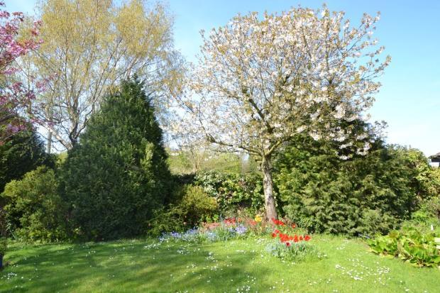 Spring flower blo...