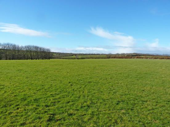 21 Acre pasture land