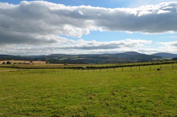 Grazing Land/View