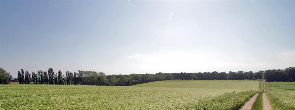 Barley and Woodland