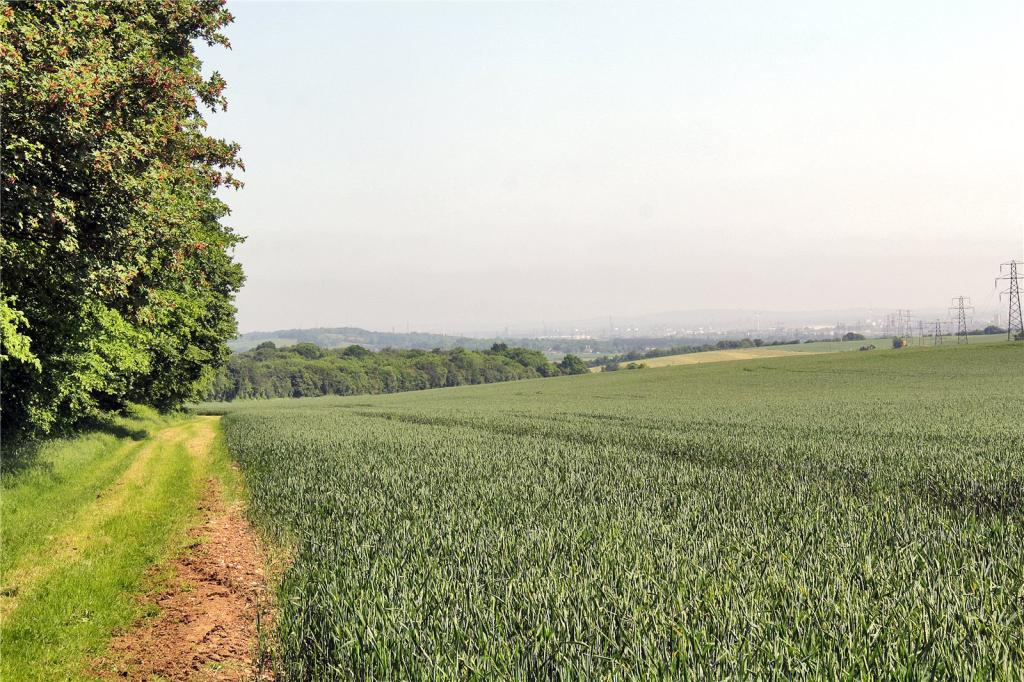 Wheat and woodland