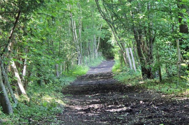 Bridleway In Woods
