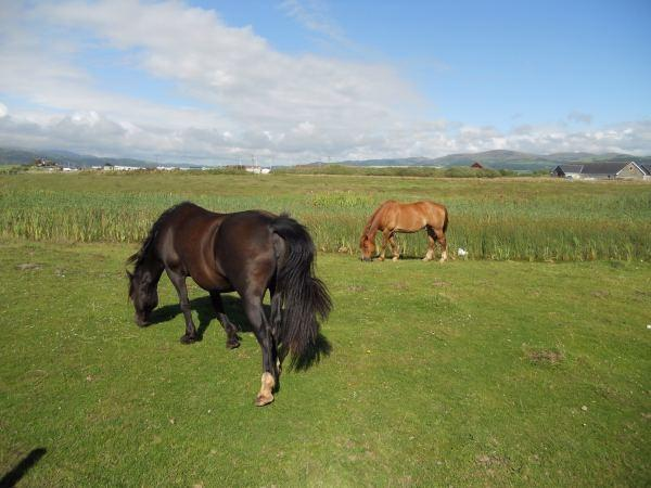 Simple UK Private Static Caravan Holiday Hire At Searivers Ynyslas Borth