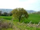 Farm House in Le Marche, Ancona...