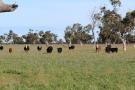 Farm House for sale in SA, Culburra