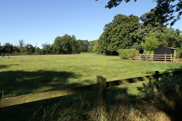 Meadow Behind