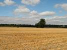 Farm Land in 14.6 hectares (36.1 for sale