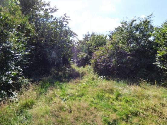 Rear Garden No 7