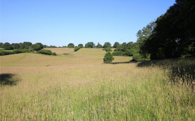 Fields Westward