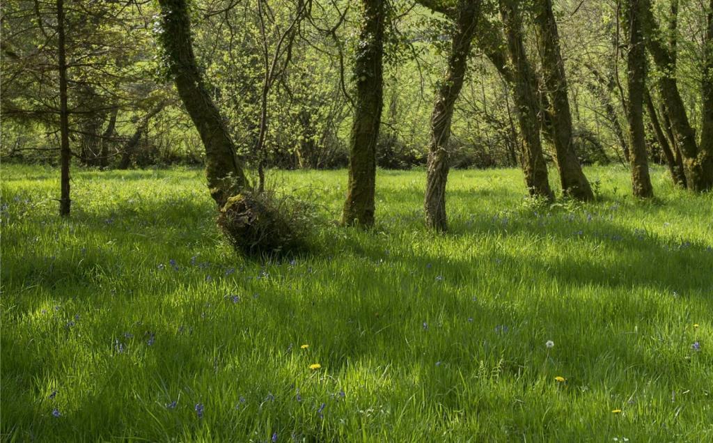 Woodlands Alt