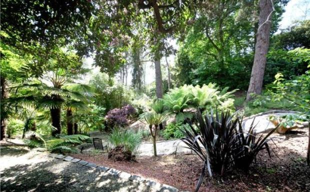 Rear Garden Woodland