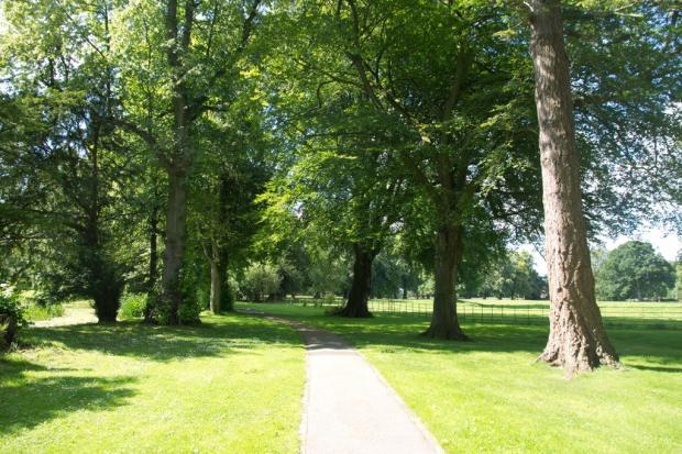 Tree Lined Pathwa...