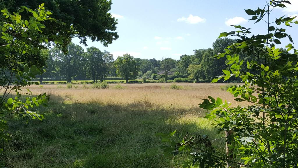 Fields Opposite