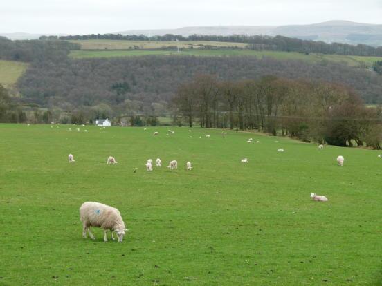 Surrounding Fields