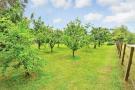 External - Orchard