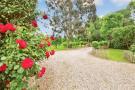 External - Roses