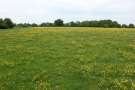 Land for sale in Fordingbridge, Hampshire