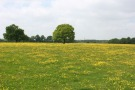 Land in Fordingbridge, Hampshire
