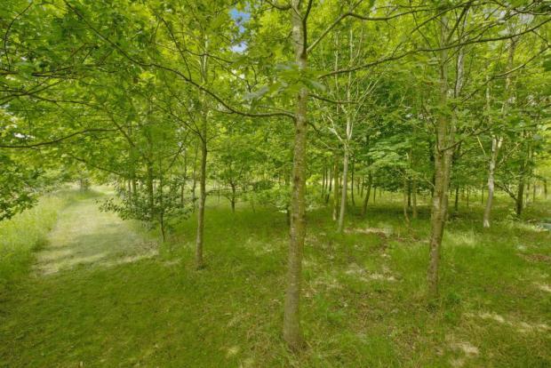 Aldwyck Wood fpz1708