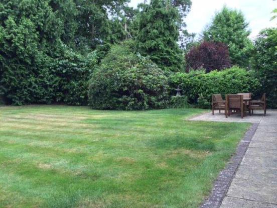 zzz rear garden2