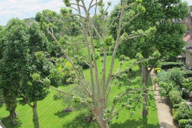 Garden second angle