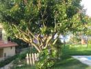 Image 22, 5 Bedroomed Villa : AV1428