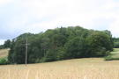 Woodland & Sporting Rights Land for sale