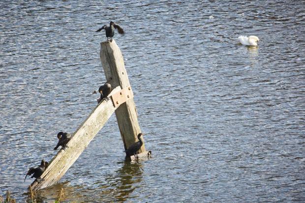 Walton Locks