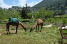Camel rides in Kaya