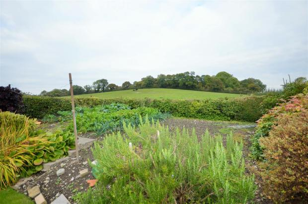 Vegetable Patch and