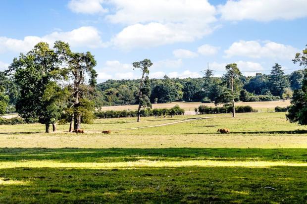 Parkland Views