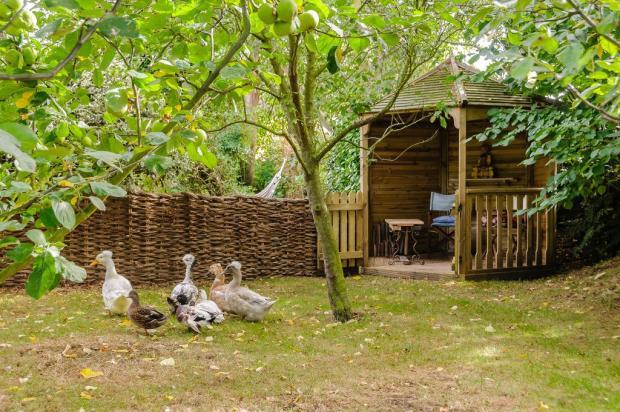 Ducks & Summerhs