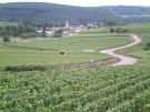 Vineyards Beaune