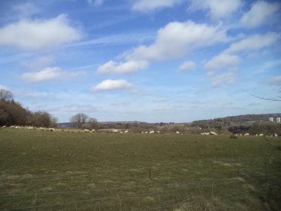 Adjacent farmland