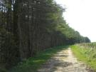 Approx 25.96 Acres of Woodland Land
