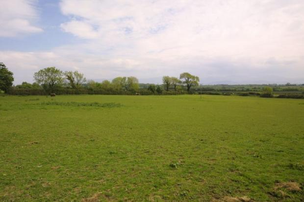One of the fields