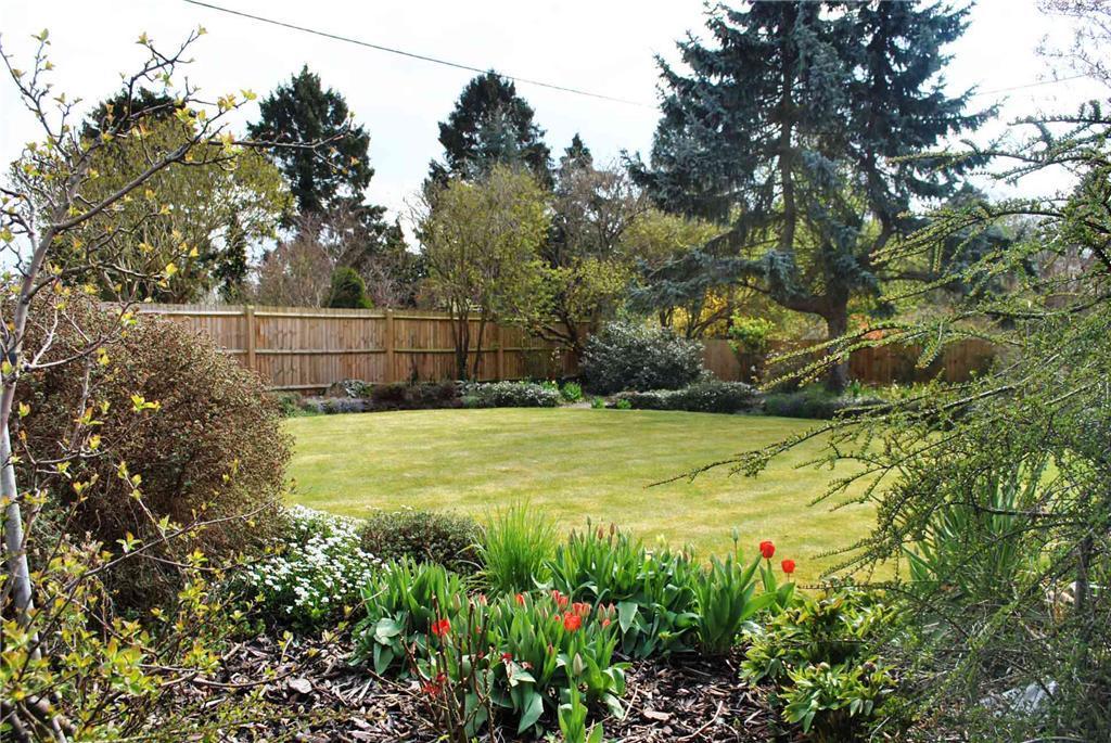 Rear Garden
