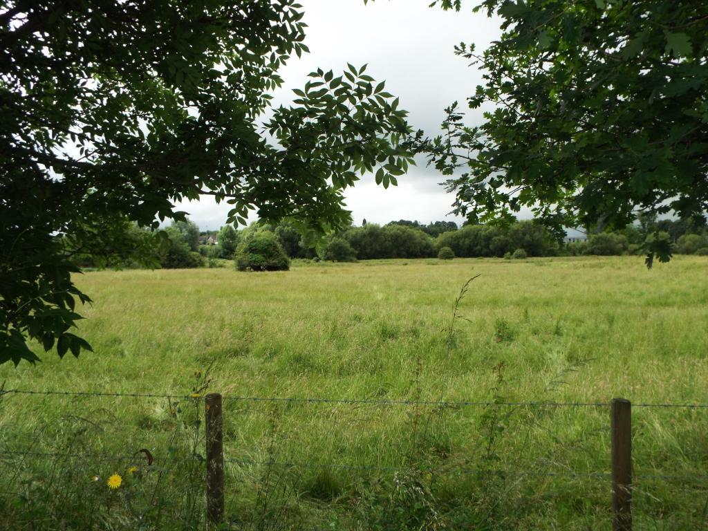 Fields View
