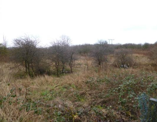 Mawson's Field site