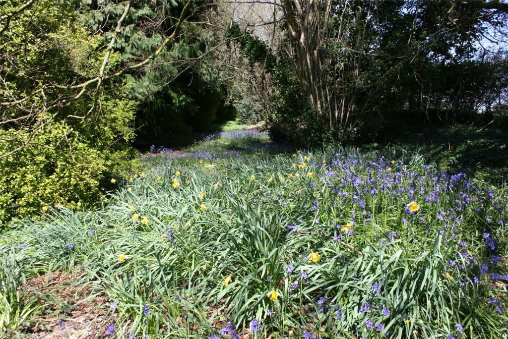 Bluebells/Daffodils