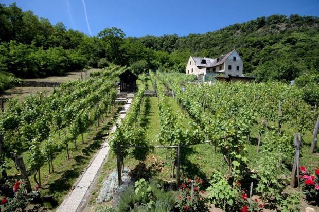 Vineyard overview