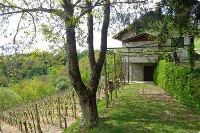 House and grape vines