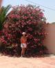 Oleander Tree